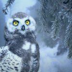 Pengicau.Net; Alternatif Mengatasi segala Permasalahan tentang Burung